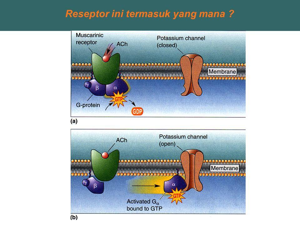 Reseptor ini termasuk yang mana