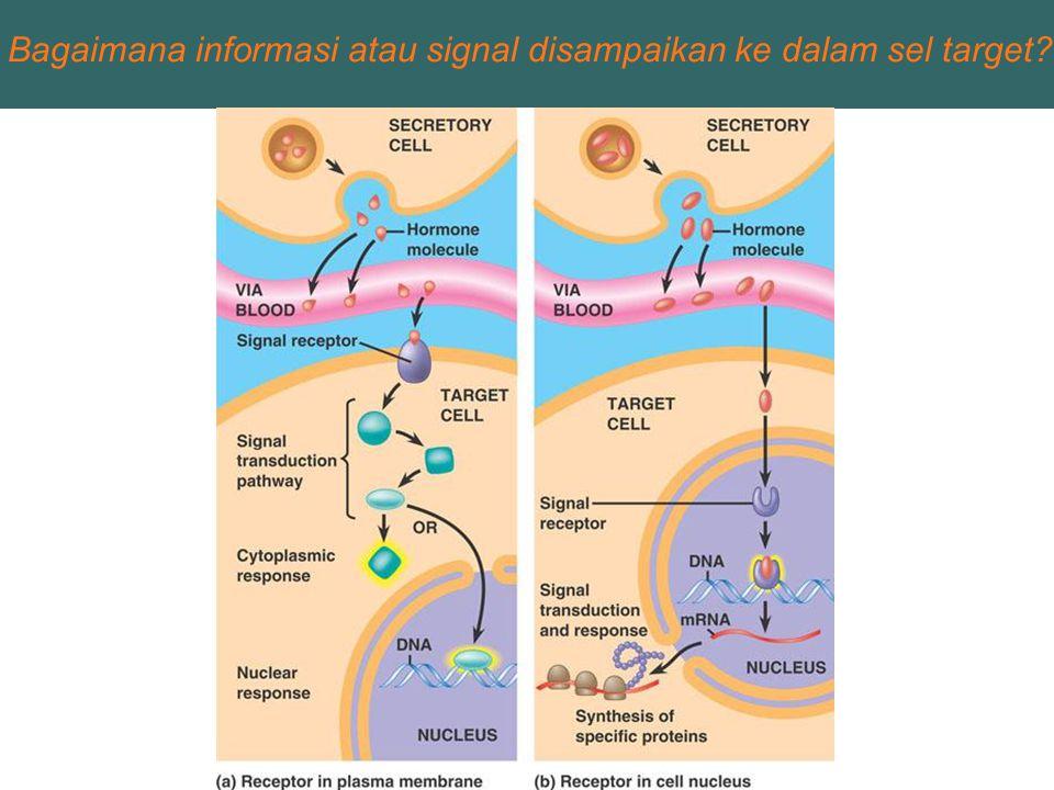 Bagaimana informasi atau signal disampaikan ke dalam sel target