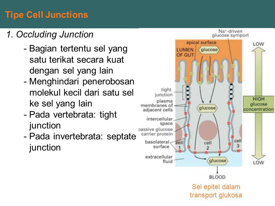 Sel epitel dalam transport glukosa