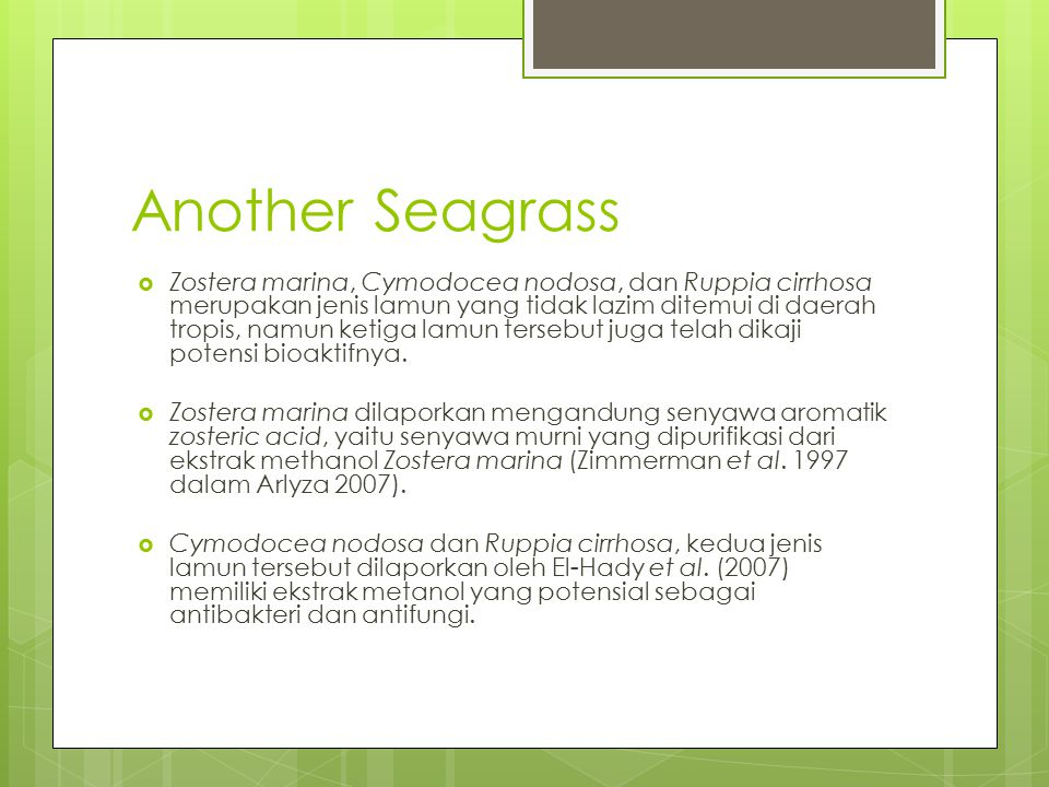 Another Seagrass