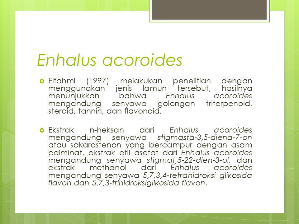 Enhalus acoroides