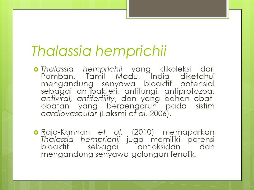 Thalassia hemprichii