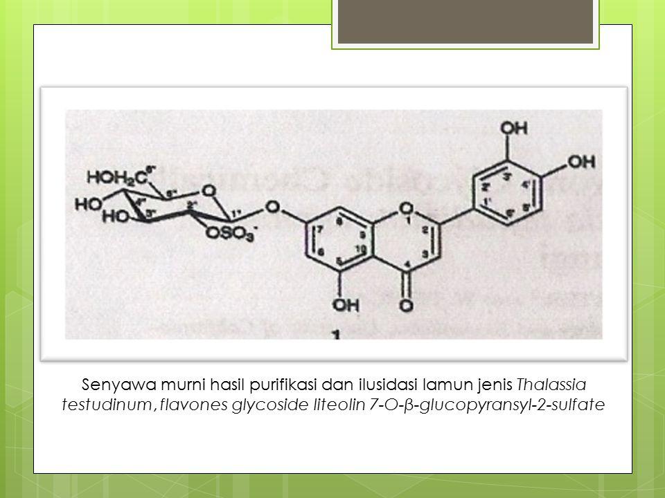 Senyawa murni hasil purifikasi dan ilusidasi lamun jenis Thalassia testudinum, flavones glycoside liteolin 7-O-β-glucopyransyl-2-sulfate