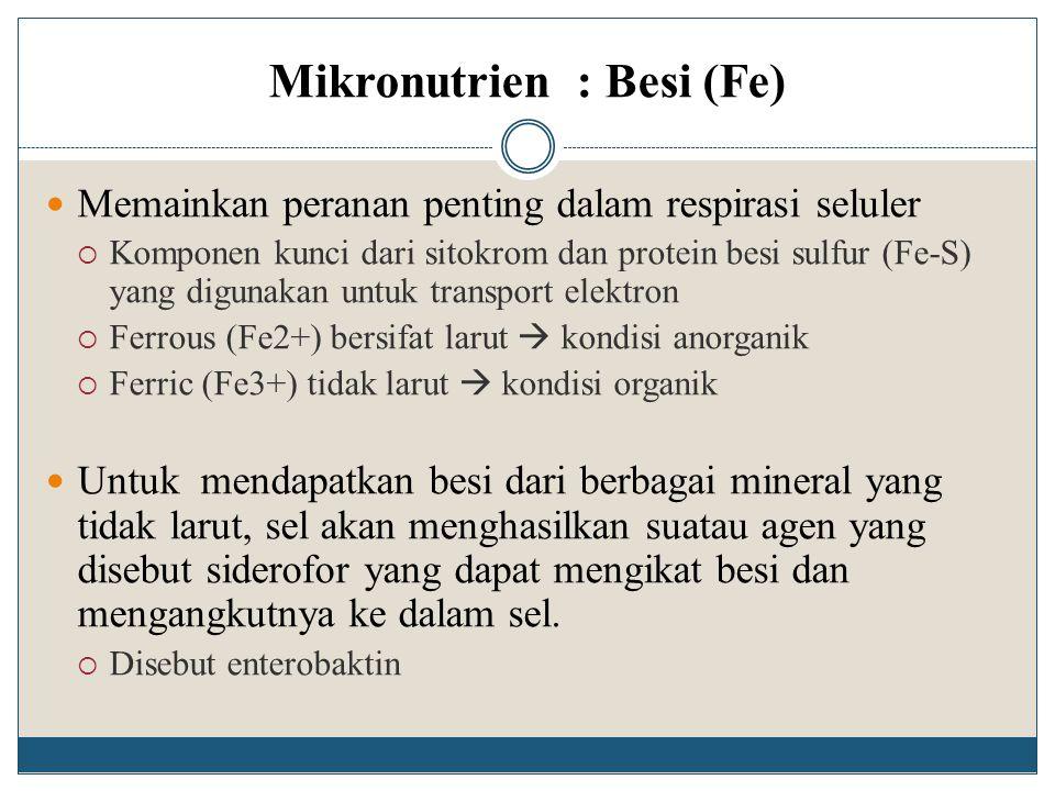 Mikronutrien : Besi (Fe)