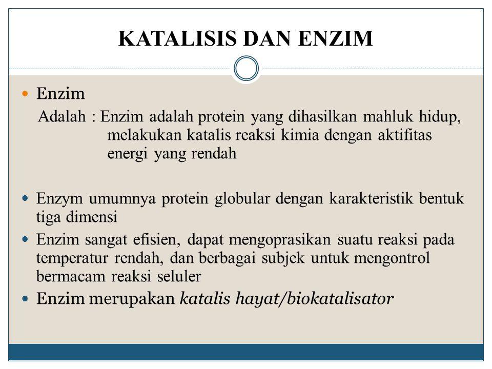 KATALISIS DAN ENZIM Enzim