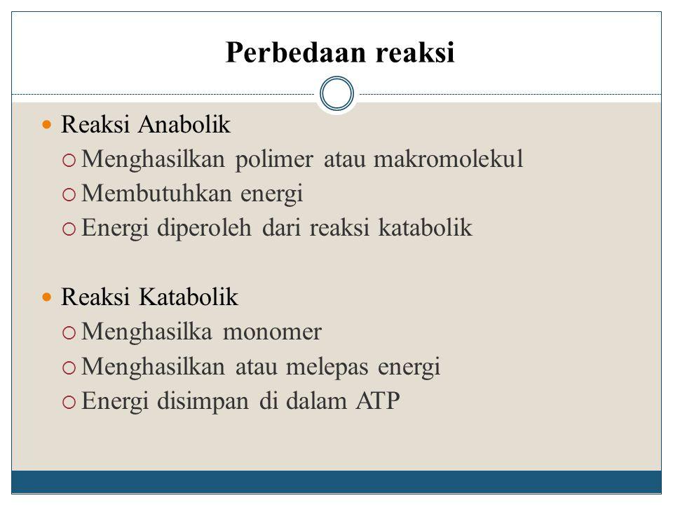 Perbedaan reaksi Reaksi Anabolik