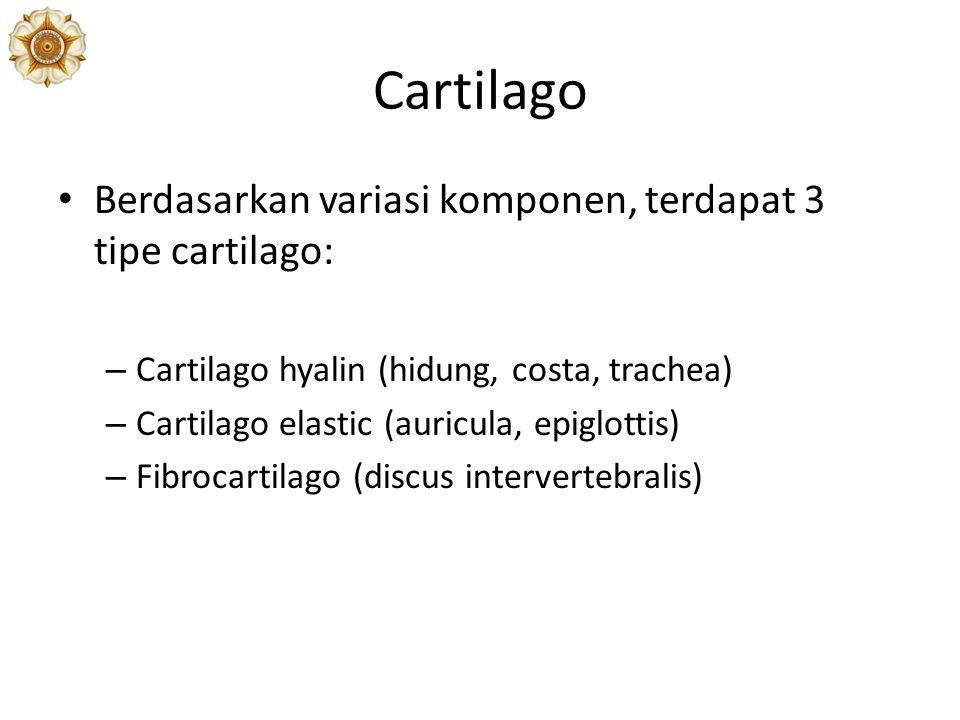 Cartilago Berdasarkan variasi komponen, terdapat 3 tipe cartilago: