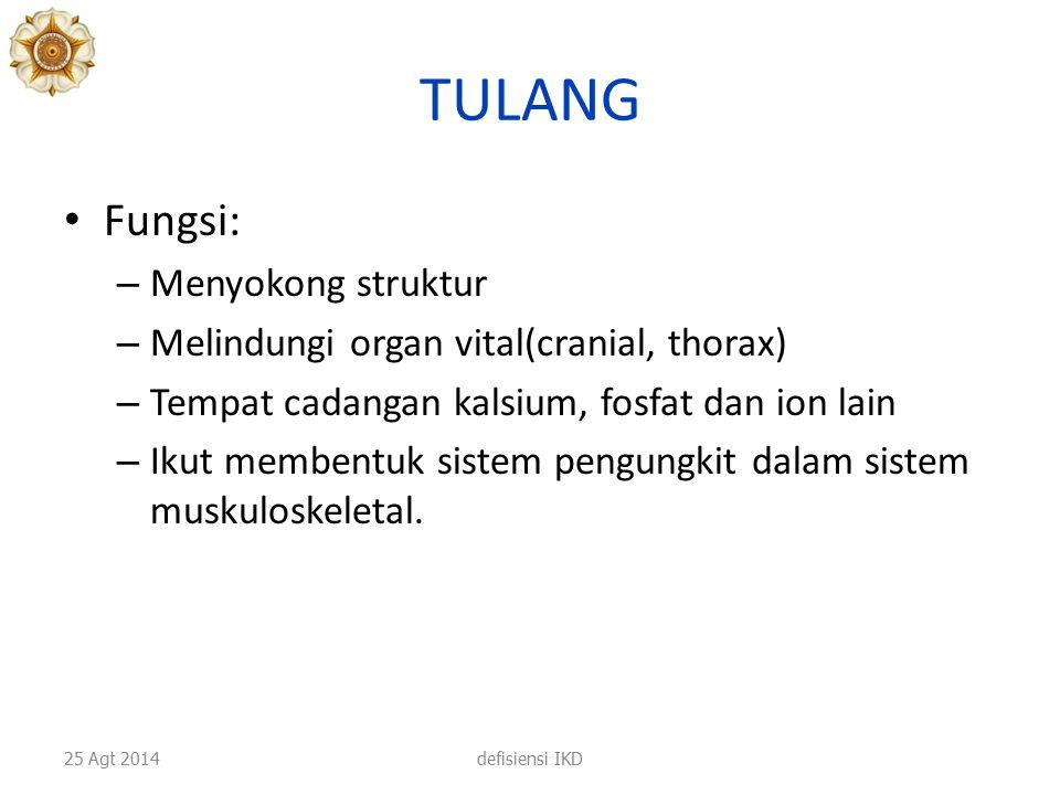 TULANG Fungsi: Menyokong struktur