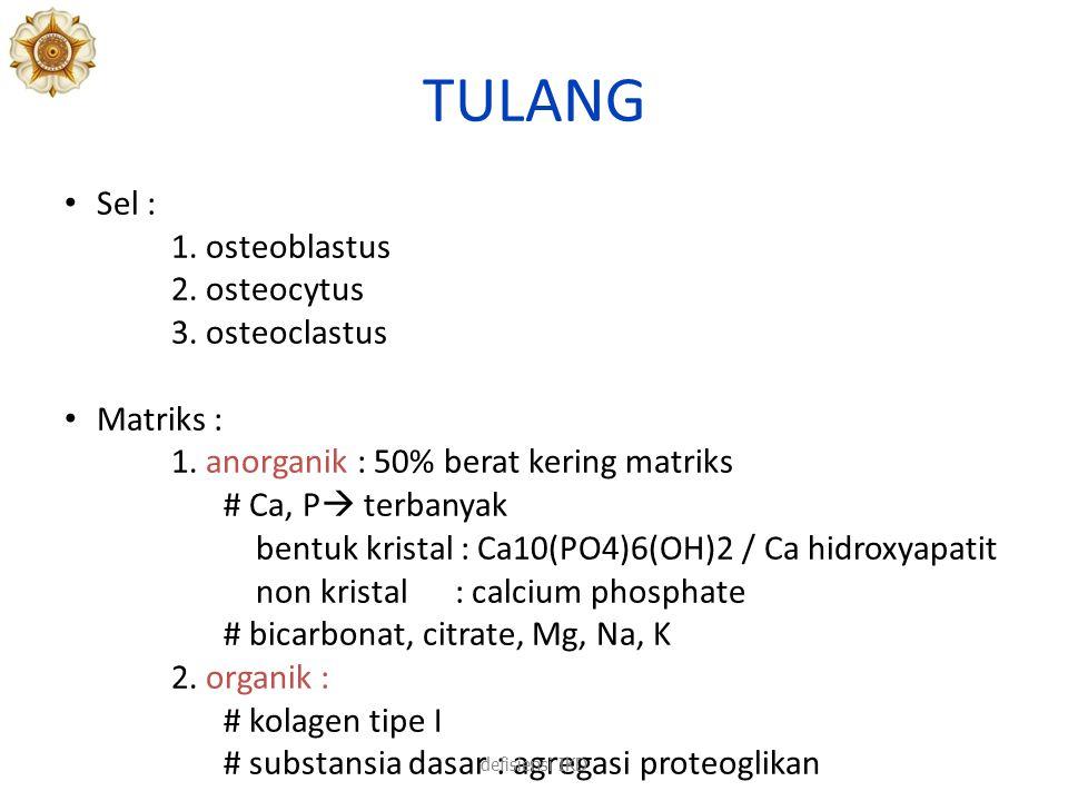 TULANG Sel : 1. osteoblastus 2. osteocytus 3. osteoclastus Matriks :