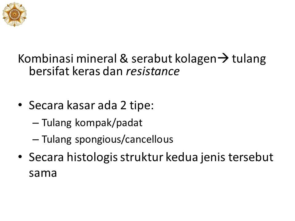 Secara histologis struktur kedua jenis tersebut sama