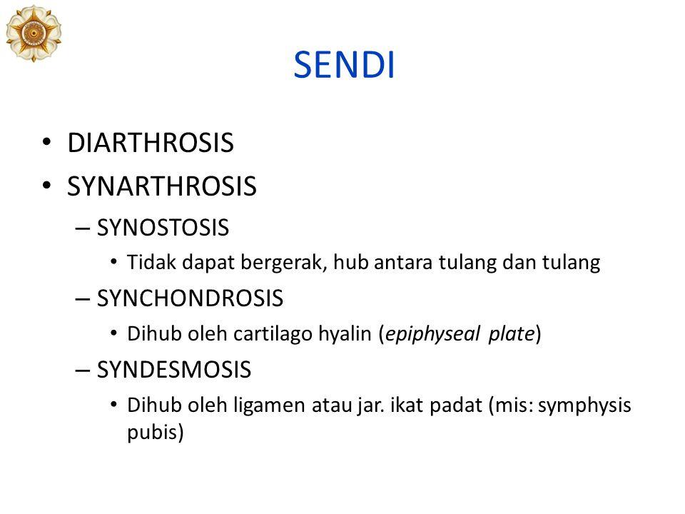 SENDI DIARTHROSIS SYNARTHROSIS SYNOSTOSIS SYNCHONDROSIS SYNDESMOSIS
