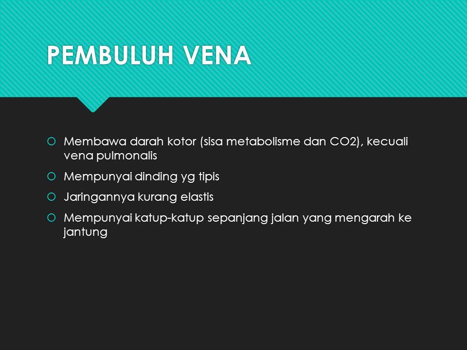 PEMBULUH VENA Membawa darah kotor (sisa metabolisme dan CO2), kecuali vena pulmonalis. Mempunyai dinding yg tipis.
