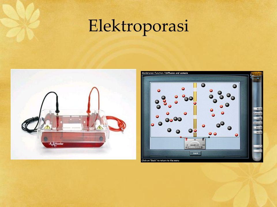 Elektroporasi