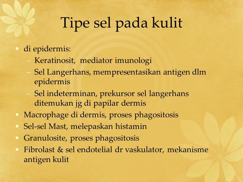 Tipe sel pada kulit di epidermis: Keratinosit, mediator imunologi