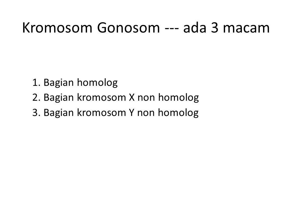 Kromosom Gonosom --- ada 3 macam