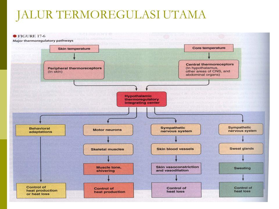 JALUR TERMOREGULASI UTAMA