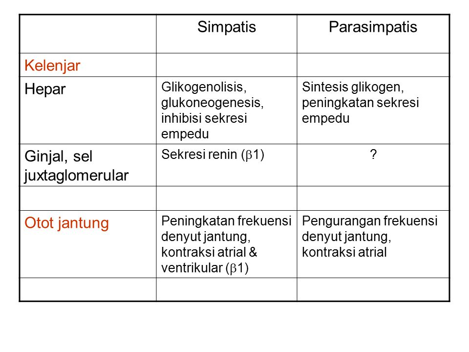 Ginjal, sel juxtaglomerular