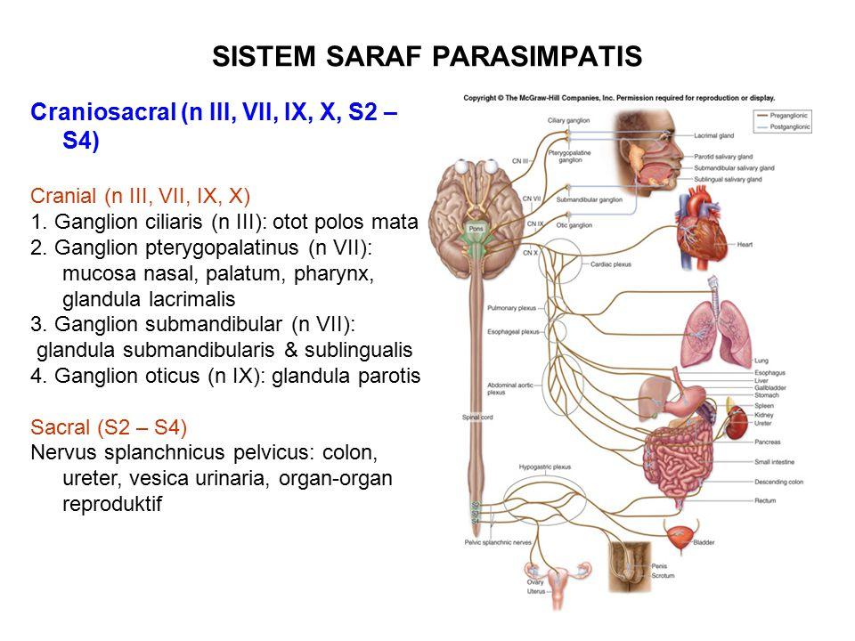 SISTEM SARAF PARASIMPATIS