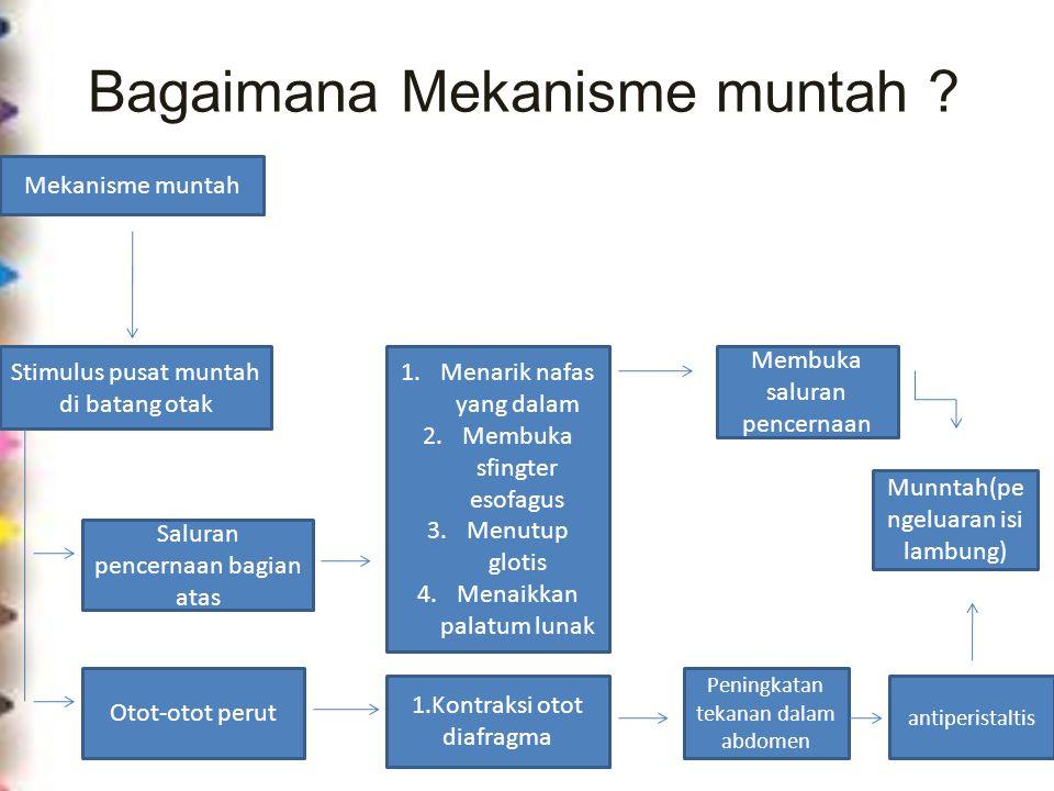 Bagaimana Mekanisme muntah