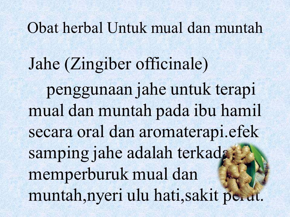 Obat herbal Untuk mual dan muntah