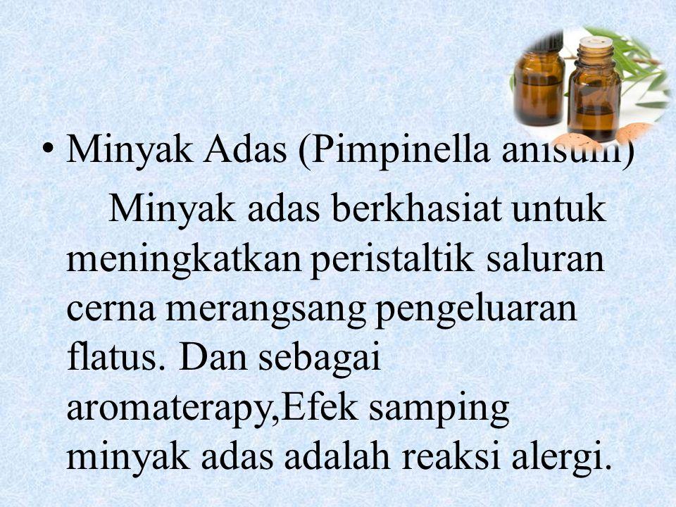 Minyak Adas (Pimpinella anisum)