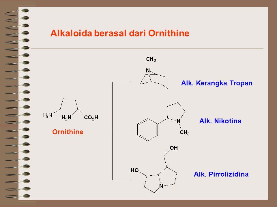 Alkaloida berasal dari Ornithine