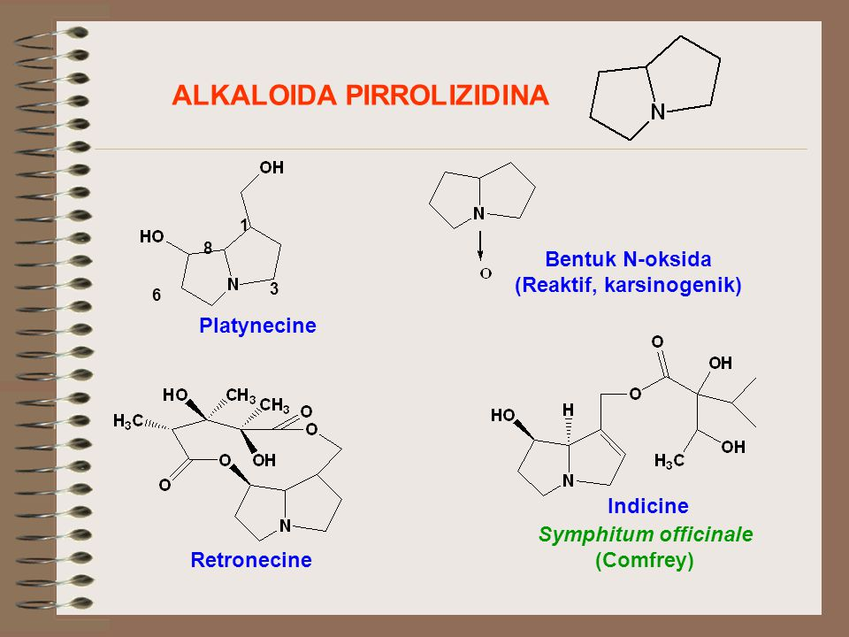 ALKALOIDA PIRROLIZIDINA (Reaktif, karsinogenik)