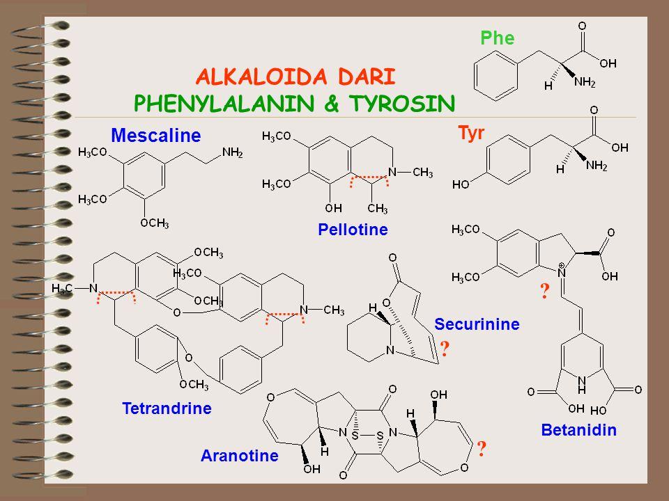 PHENYLALANIN & TYROSIN