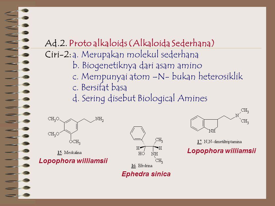 Ad.2. Proto alkaloids (Alkaloida Sederhana)