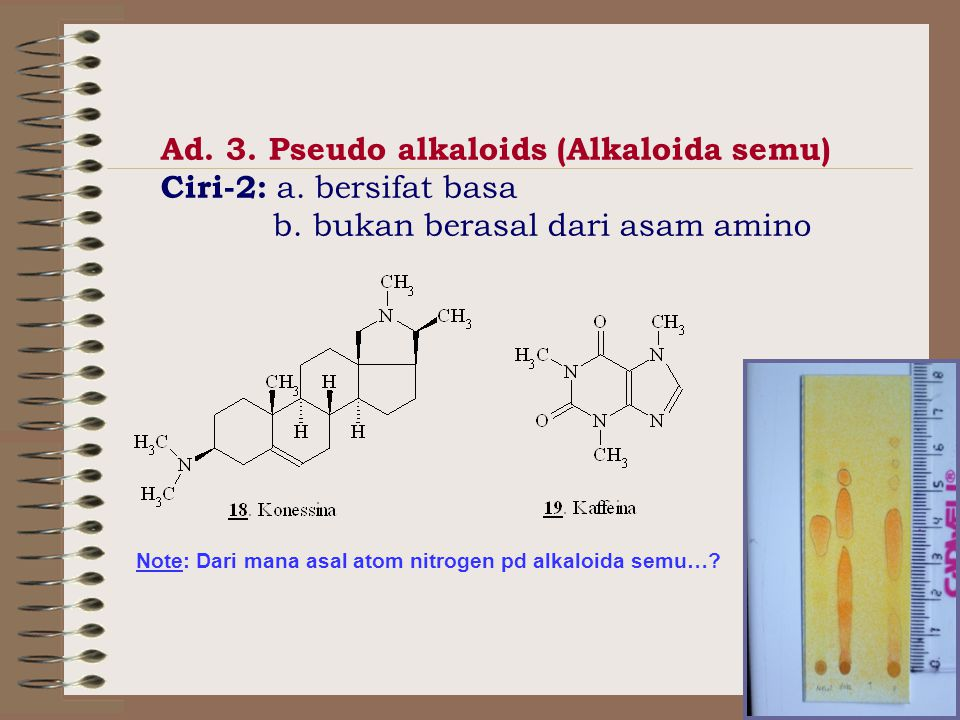 Ad. 3. Pseudo alkaloids (Alkaloida semu) Ciri-2: a. bersifat basa