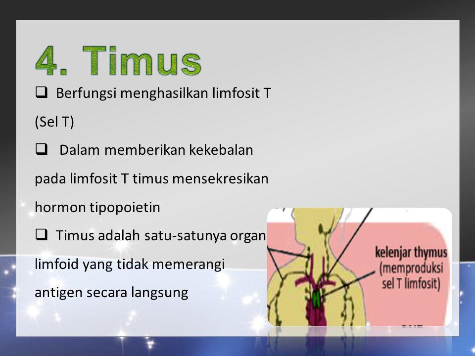 4. Timus Berfungsi menghasilkan limfosit T (Sel T)