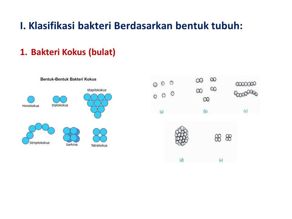I. Klasifikasi bakteri Berdasarkan bentuk tubuh:
