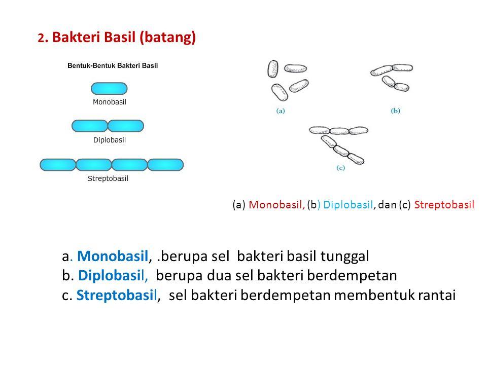 a. Monobasil, .berupa sel bakteri basil tunggal