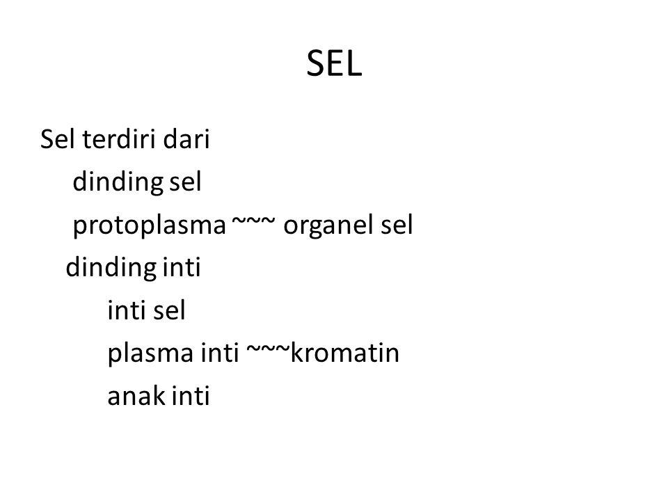 SEL Sel terdiri dari dinding sel protoplasma ~~~ organel sel