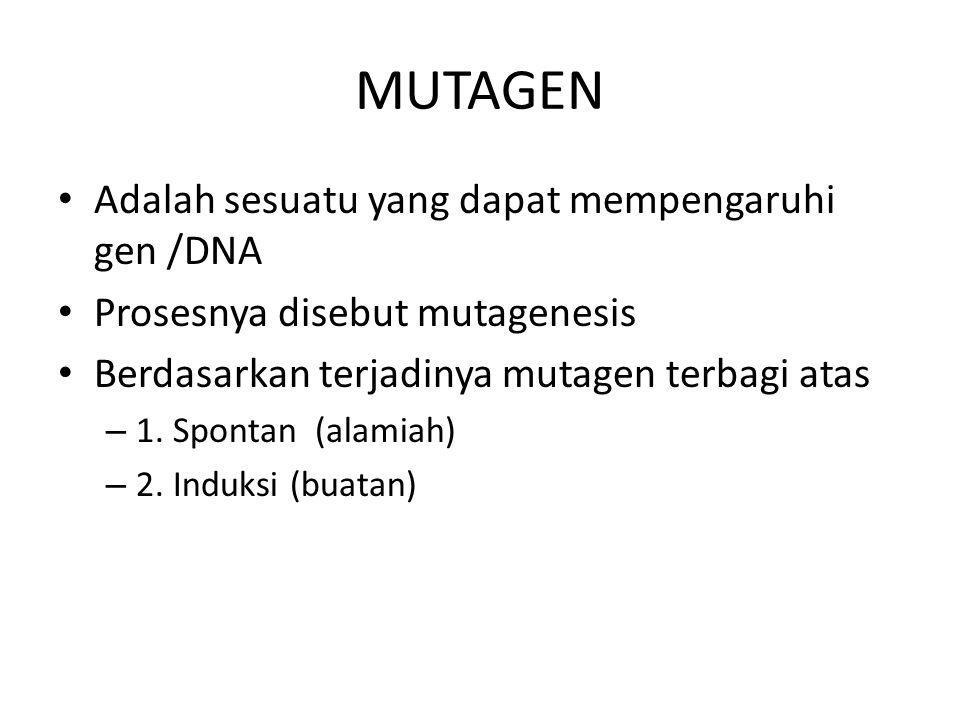 MUTAGEN Adalah sesuatu yang dapat mempengaruhi gen /DNA