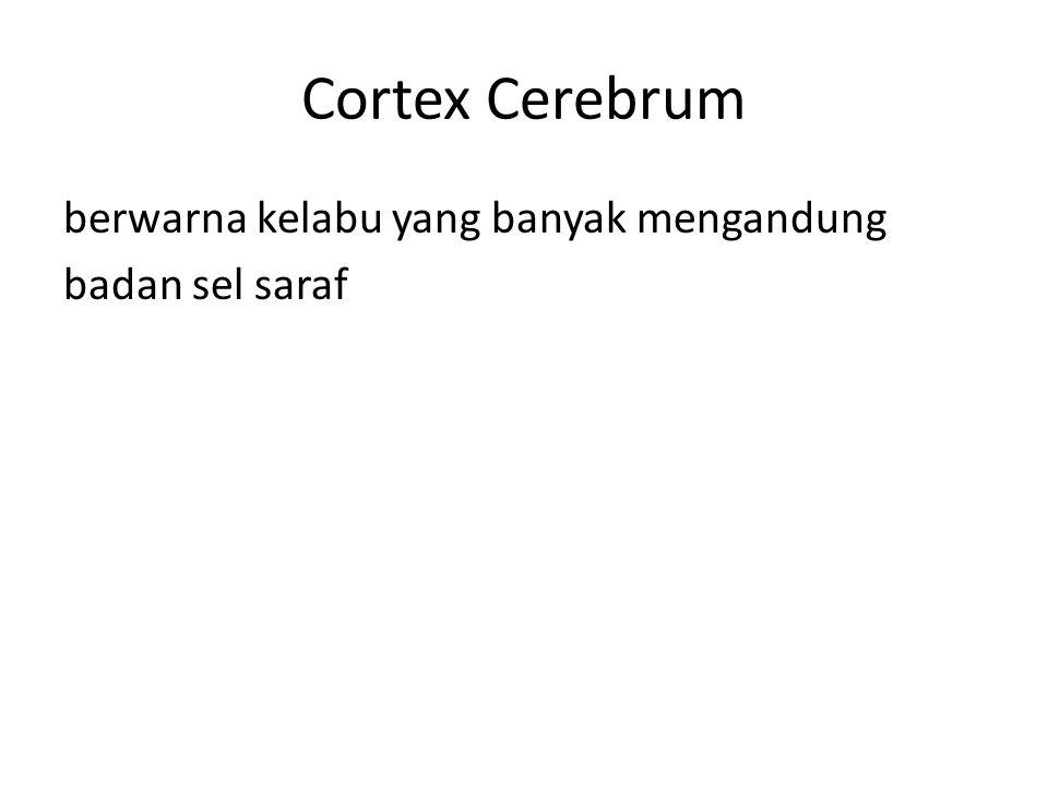 Cortex Cerebrum berwarna kelabu yang banyak mengandung badan sel saraf