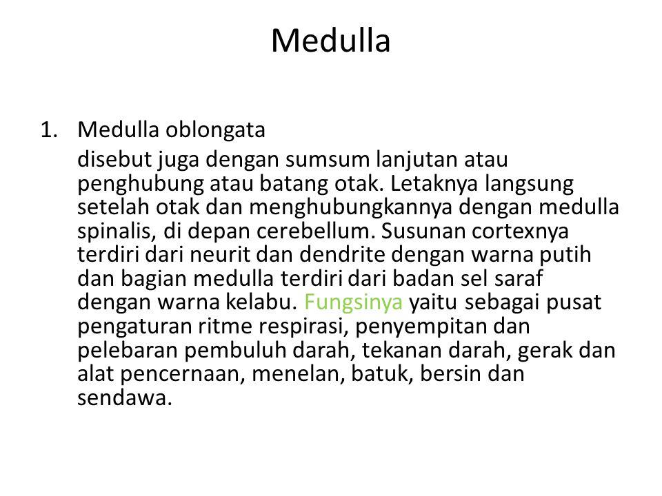 Medulla Medulla oblongata