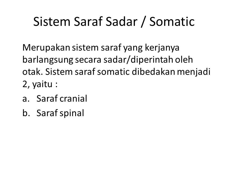 Sistem Saraf Sadar / Somatic