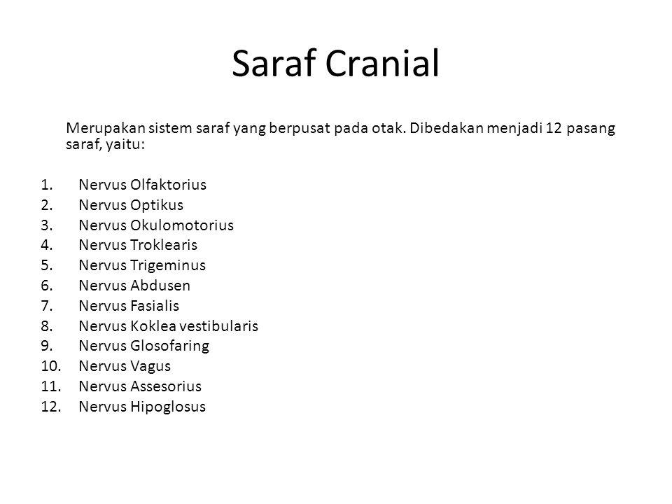 Saraf Cranial Merupakan sistem saraf yang berpusat pada otak. Dibedakan menjadi 12 pasang saraf, yaitu: