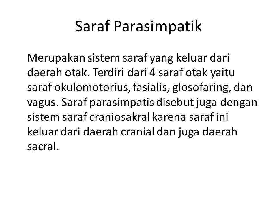 Saraf Parasimpatik