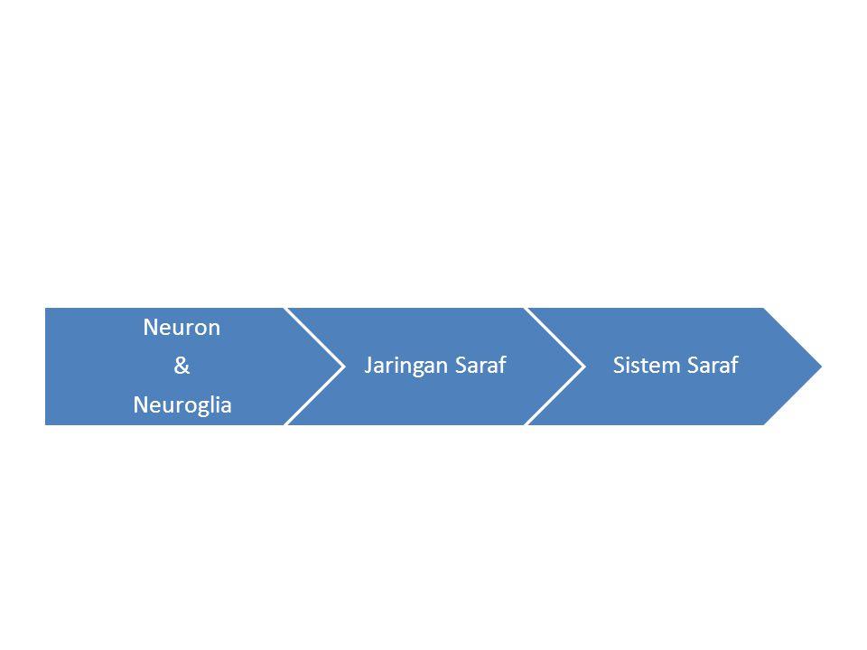 Neuron Neuroglia & Jaringan Saraf Sistem Saraf