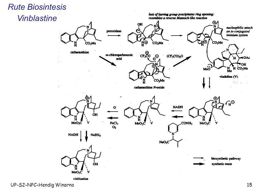 Rute Biosintesis Vinblastine UP-S2-NPC-Hendig Winarno