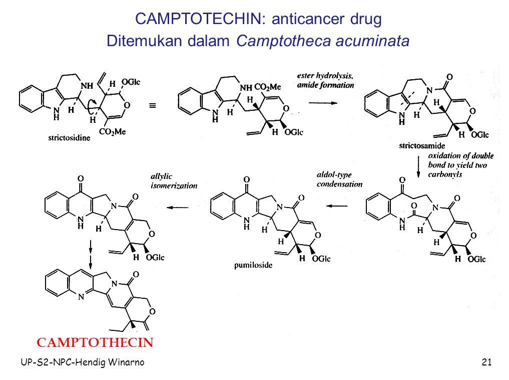 CAMPTOTECHIN: anticancer drug Ditemukan dalam Camptotheca acuminata