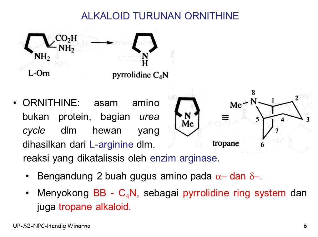 ALKALOID TURUNAN ORNITHINE