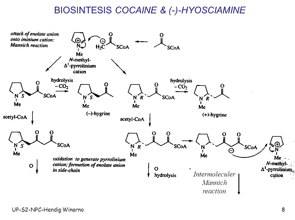BIOSINTESIS COCAINE & (-)-HYOSCIAMINE