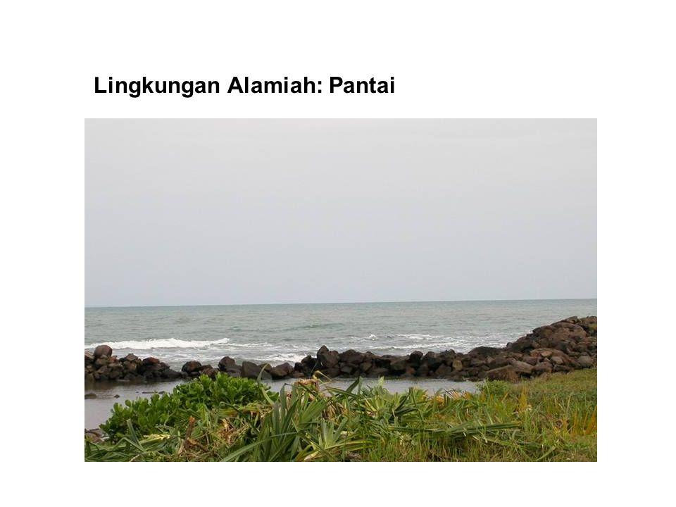 Lingkungan Alamiah: Pantai
