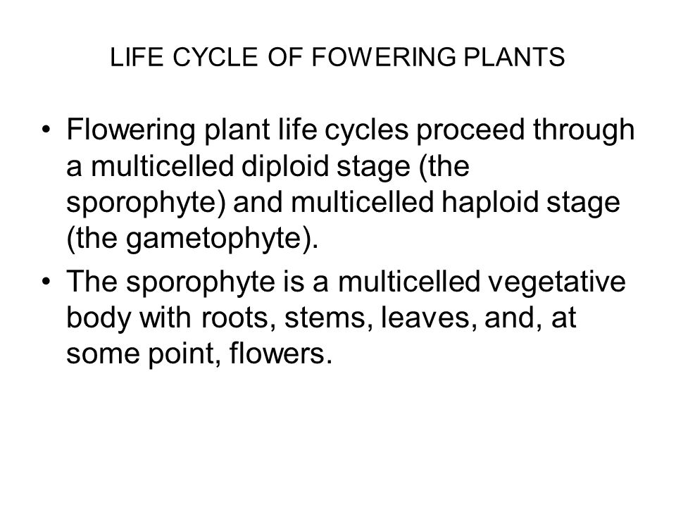 LIFE CYCLE OF FOWERING PLANTS