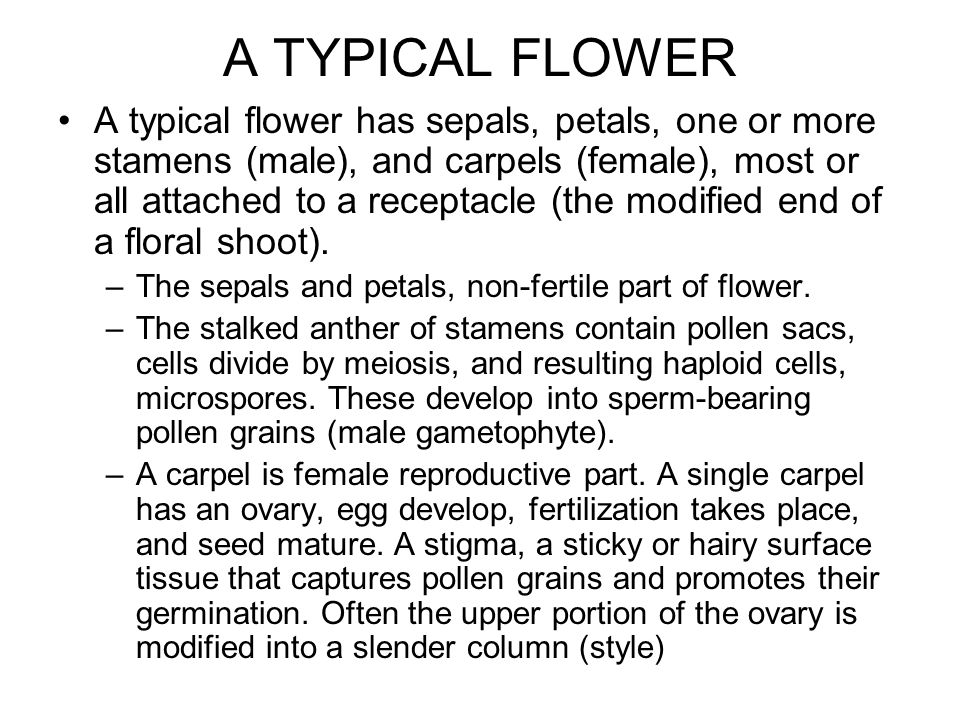 A TYPICAL FLOWER