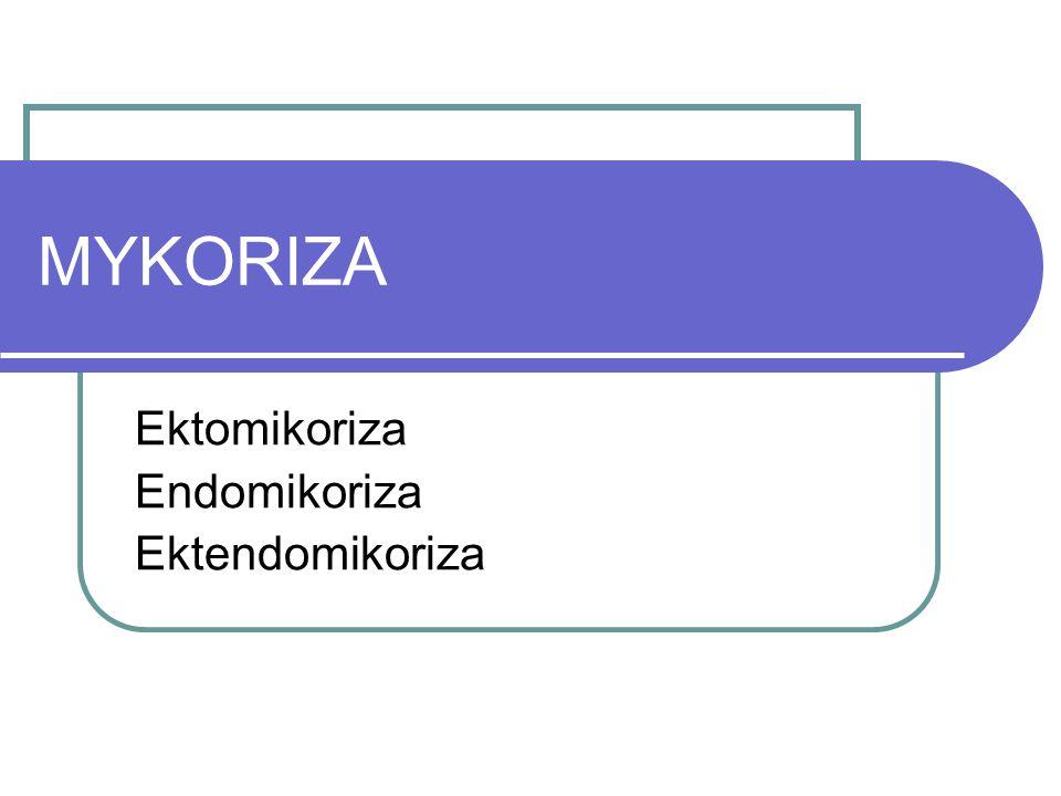 Ektomikoriza Endomikoriza Ektendomikoriza
