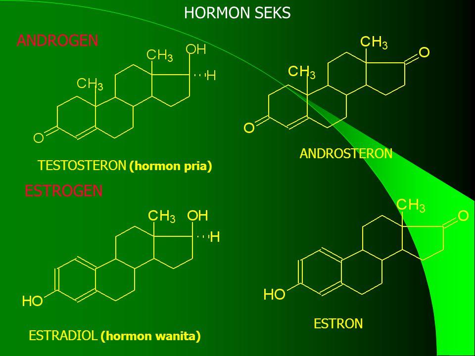 TESTOSTERON (hormon pria)